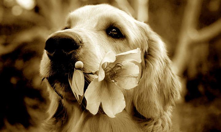 隐秘的宠物殡葬,猫猫狗狗们的死亡价码